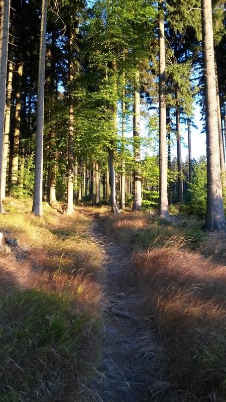 Trail po žluté nad Jeseníkem. Stejné místo jsem fotil i loni.