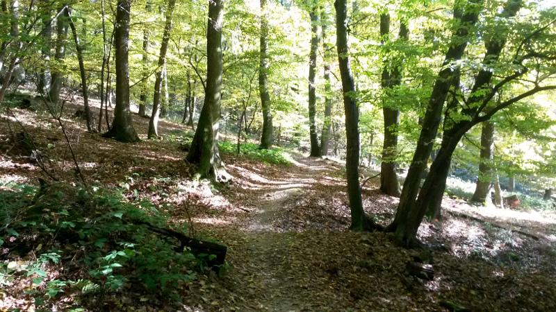 Trail po žluté od rozcestí Pod Chlmcom