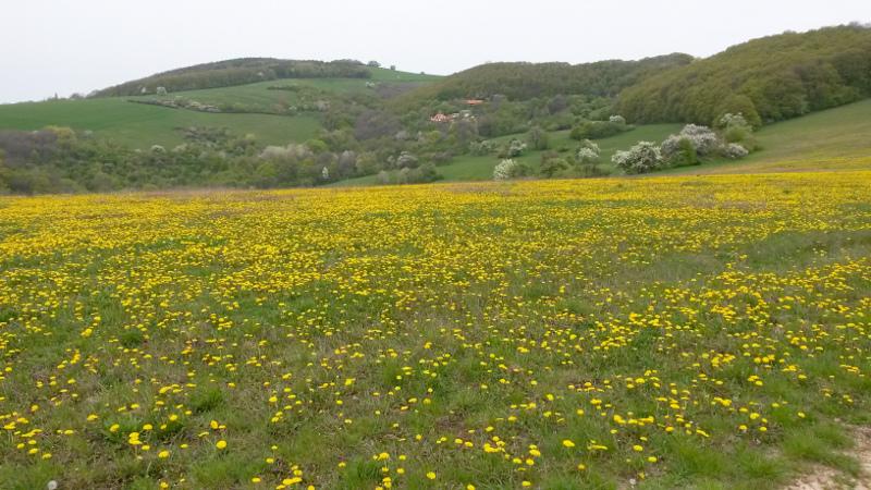Cestou z Vrbovců na státní hranici jde trasa po pěkných rozkvetlých loukách.