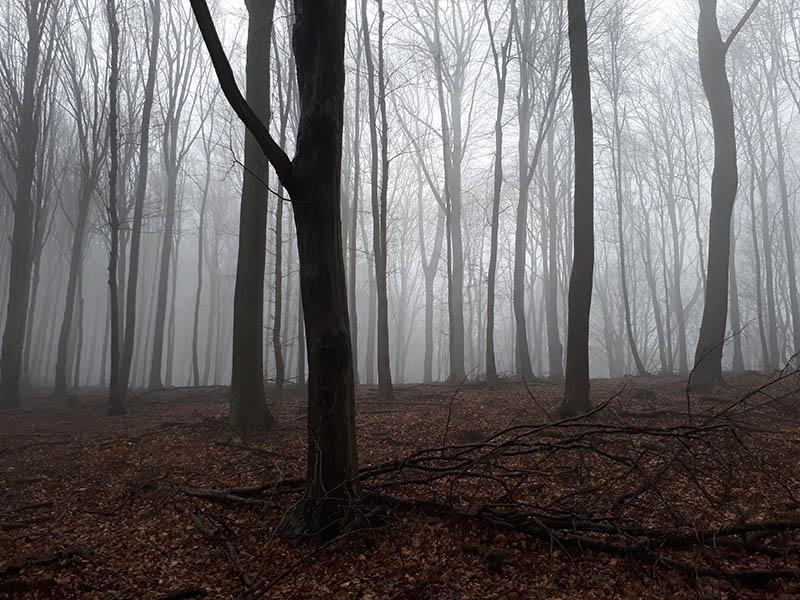 Bukové lesy cestou dolů z Panskej Javoriny. Až budu níž, mlha zmizí.