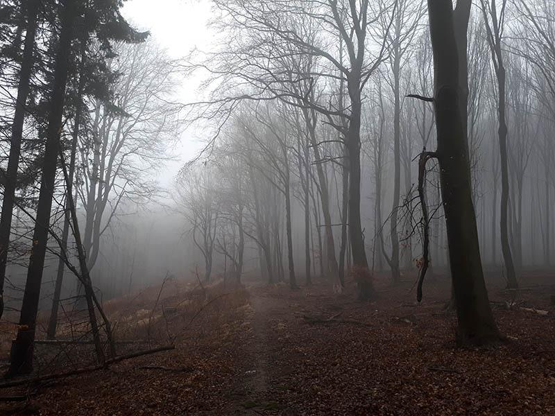 Bukové lesy cestou dolů z Panskej Javoriny. Po takových cestách se to běhá docela dobře.