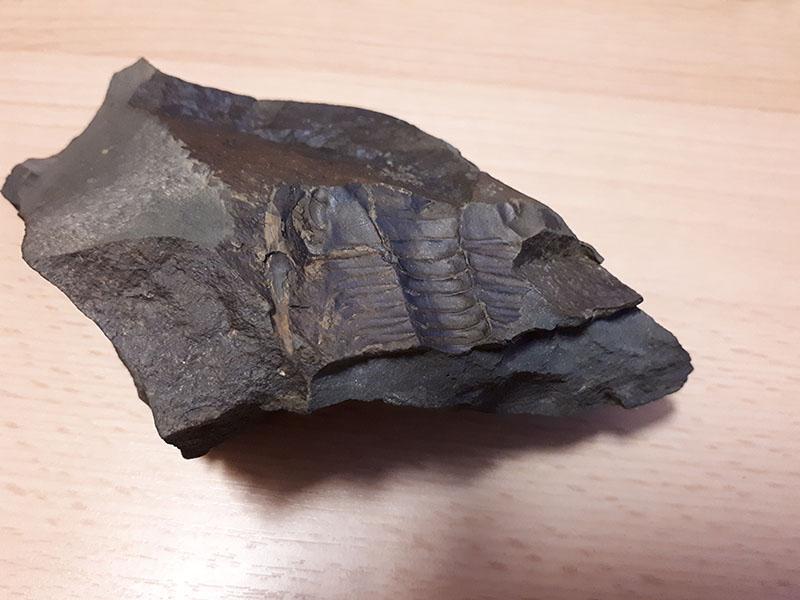 A takového věci se dají najít co by kamenem dohodil od startu. Trilobit. Sice jen otisk, ale docela pěkný, asi 500 miliónů let starý.
