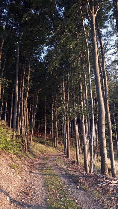 Štefánikova magistrála, všude kolem bukové lesy.